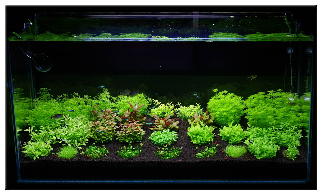December 2010 Aquascape Of The Month Invitro Scaping