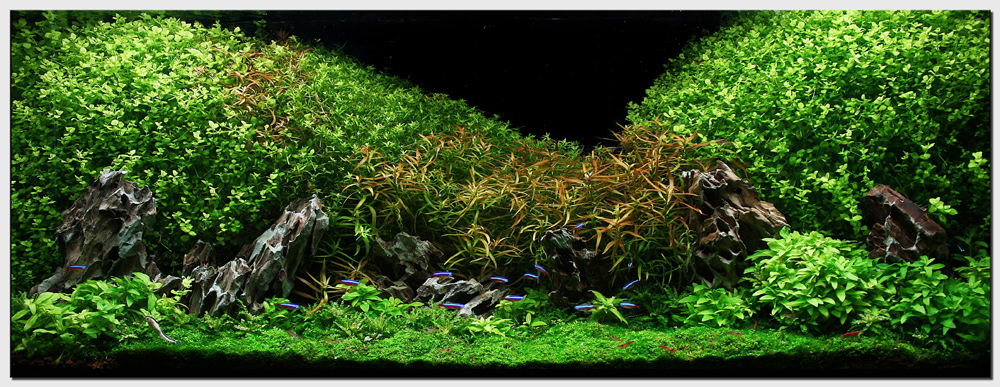 "Aquascape of the Month July 2009: ""Oshun"" 