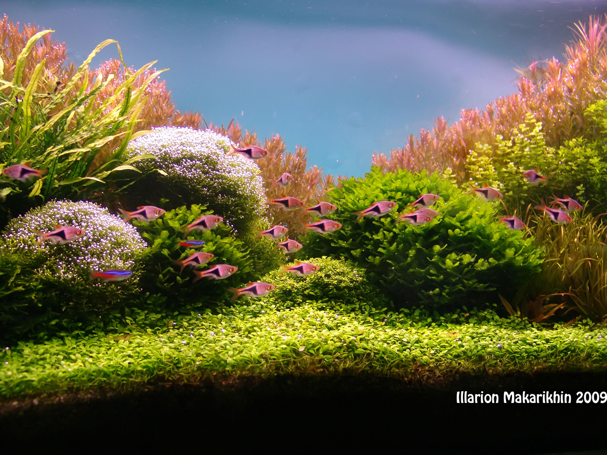 "Aquascape of the Month January 2010: ""Passage to the Red ..."