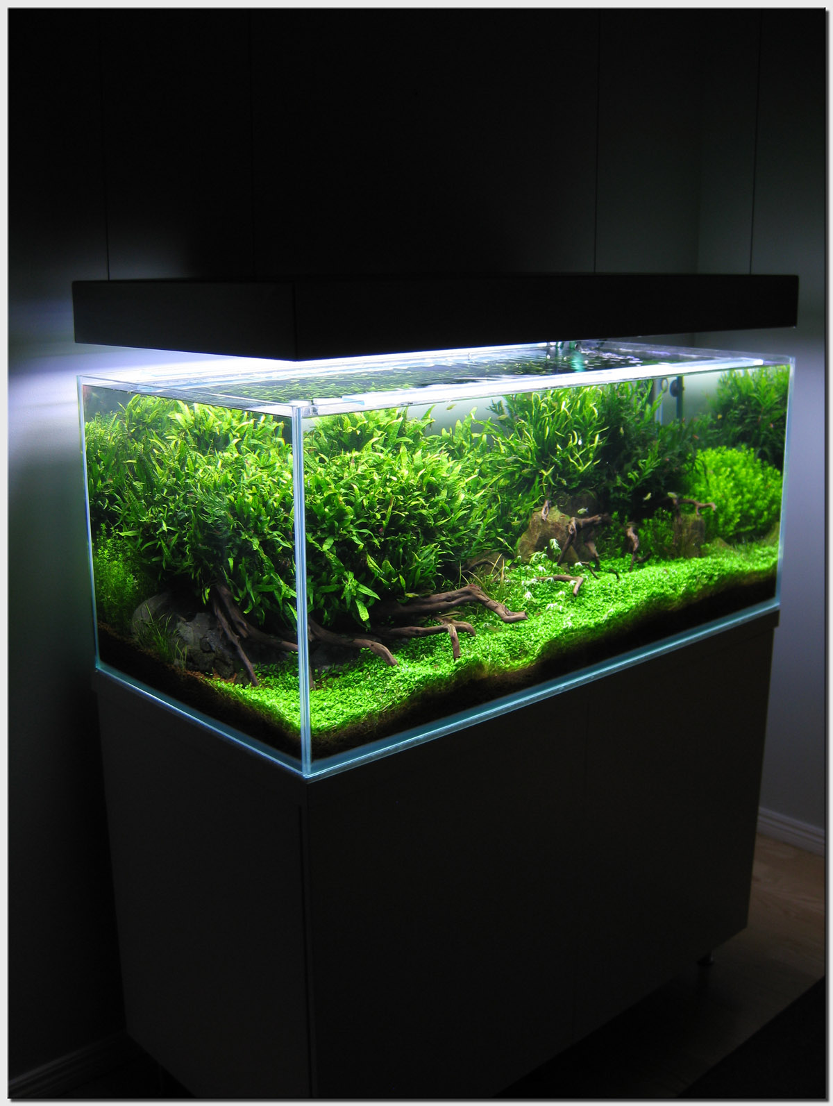 Aquascape of the month august 2009 wakrubau for Plante aquarium