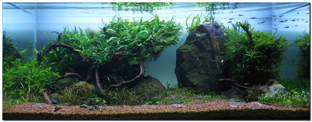 The Title Of The Aquascape Is Wakrubau. It Is The Star Trek Vulcan Word For  Evolve U201cto Develop By Gradual Changesu201d. This Scape Has Evolved From My  First ...