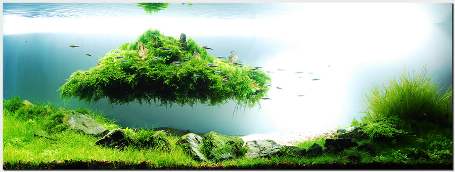 "Aquascape of the Month August 2010: ""Beyond the Nature ..."