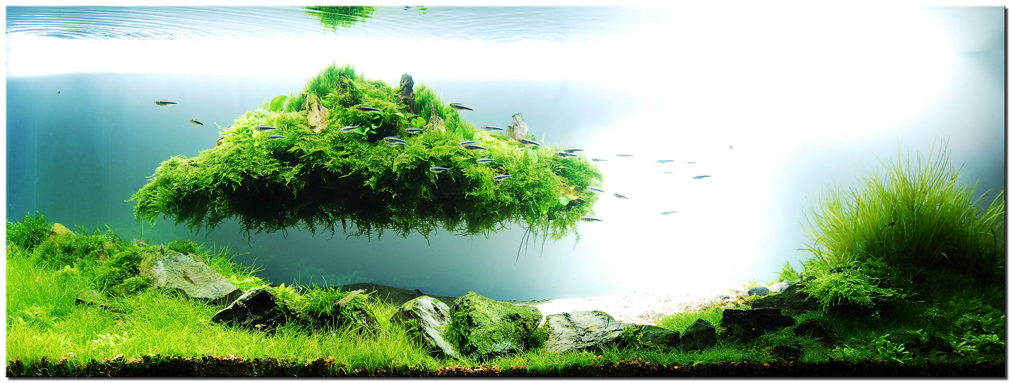 Aquascape of the month august 2010 beyond the nature Aquarium landscape