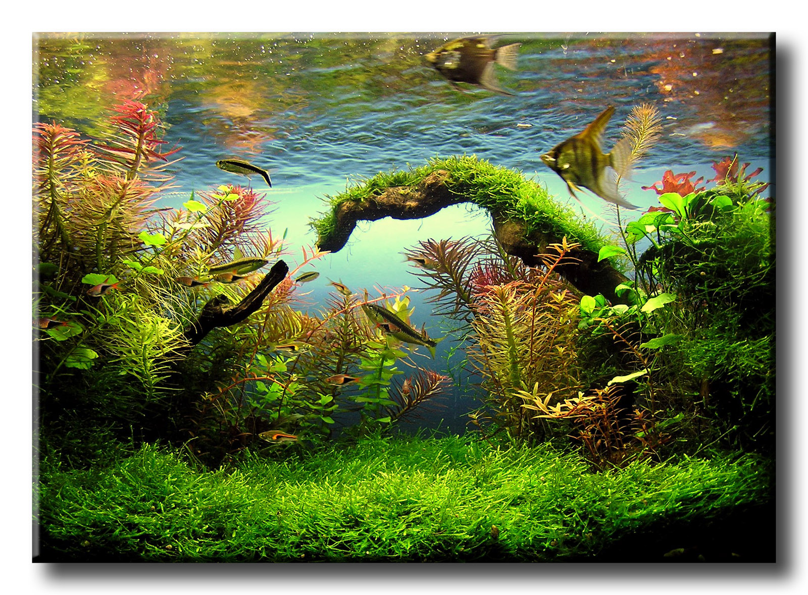 1000 images about aquarium landscapes on pinterest mini Aquarium landscape