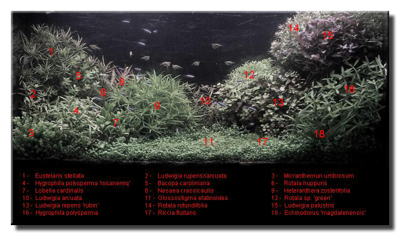 aquascape of the month july 2008 silence a pousse. Black Bedroom Furniture Sets. Home Design Ideas