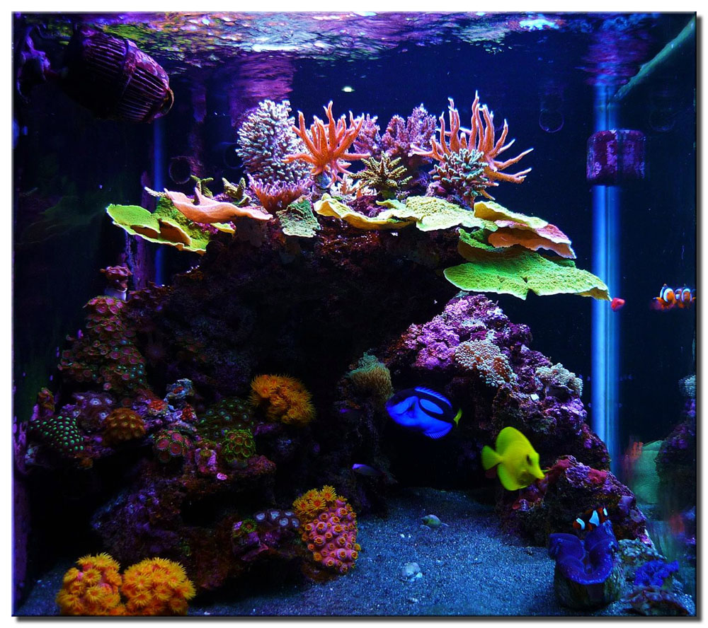 "Aquascape of the Month September 2009: ""Bonsai Garden ..."