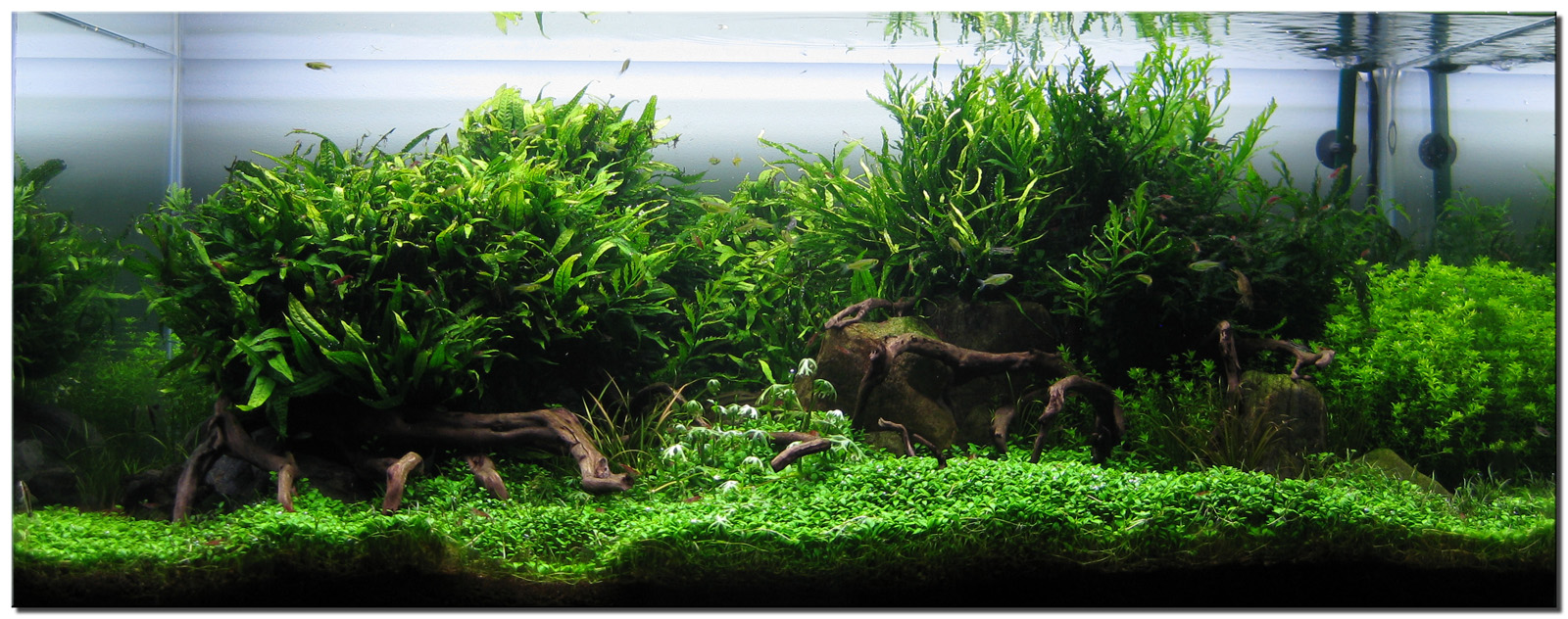 "Aquascape of the Month August 2009: ""Wakrubau ..."