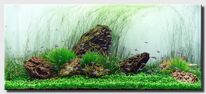 Nice Aquascaping World