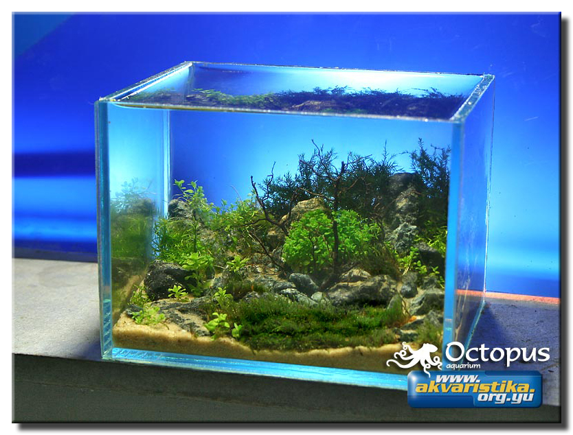 Fish tank question forums for Fish tank riddle
