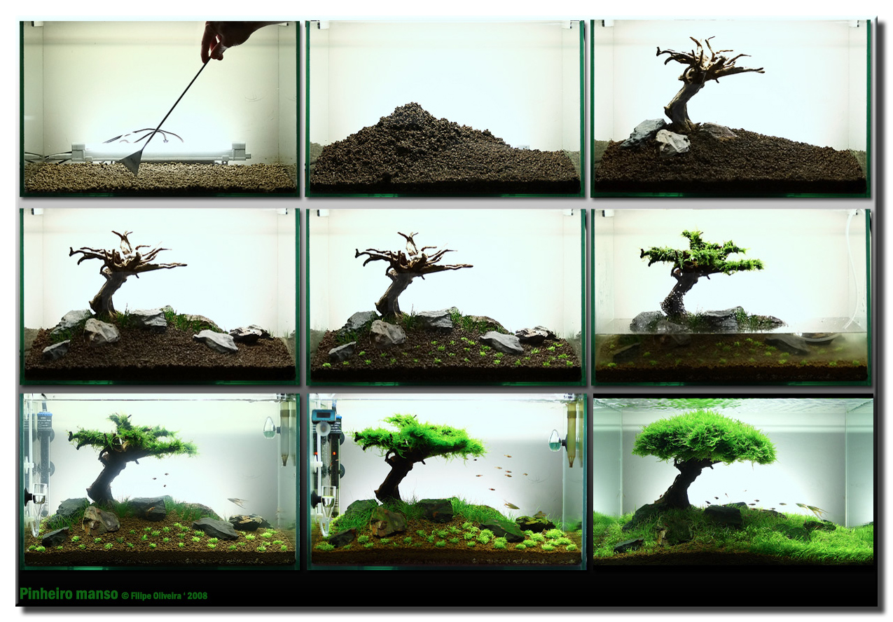 Aquascape tree step by step - Design aquasacpe ...