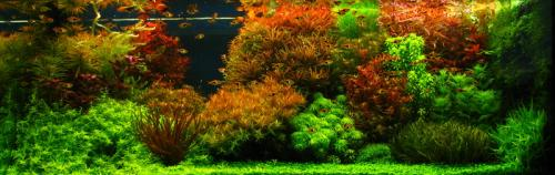 Dutch Aquascapes | AquaScaping World Forum