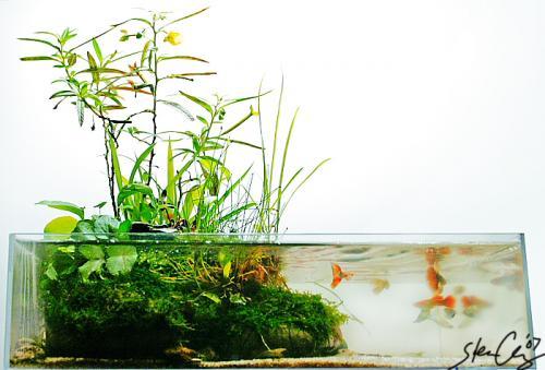 Природный аквариум своими руками
