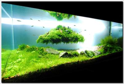 Aquascape of the Month August 2010: