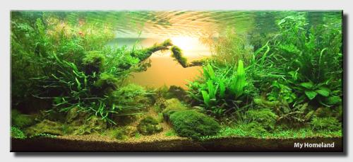 Background color | AquaScaping World Forum