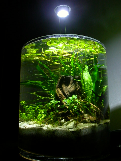 Frogbit Aquascaping World Forum