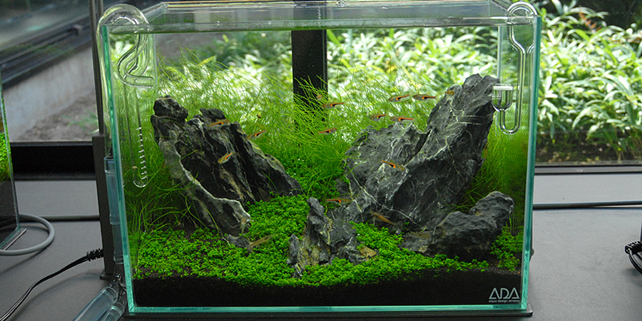 Need Help With Mini-M Fish AquaScaping World Forum