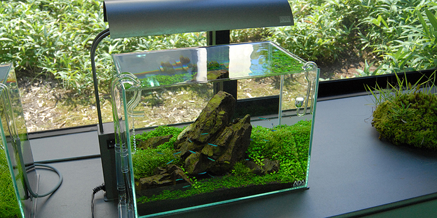 Need Help With Mini-M Fish | AquaScaping World Forum