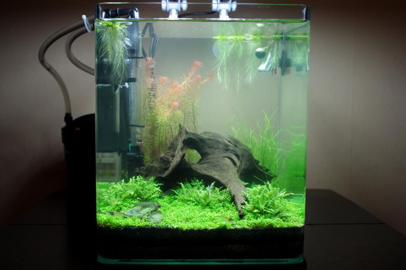 fish for a 20l nano aquascaping world forum. Black Bedroom Furniture Sets. Home Design Ideas