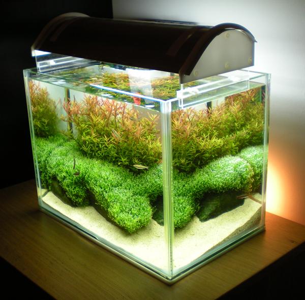 Нано аквариум в домашних условиях видео