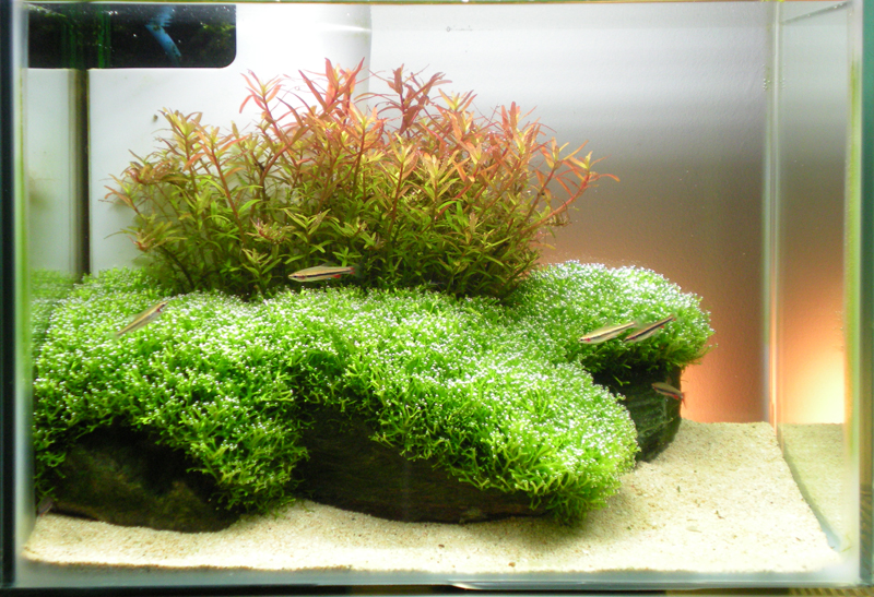 Autumn Sunrise 9th Place In Nano Category Aac Aquascaping World Forum