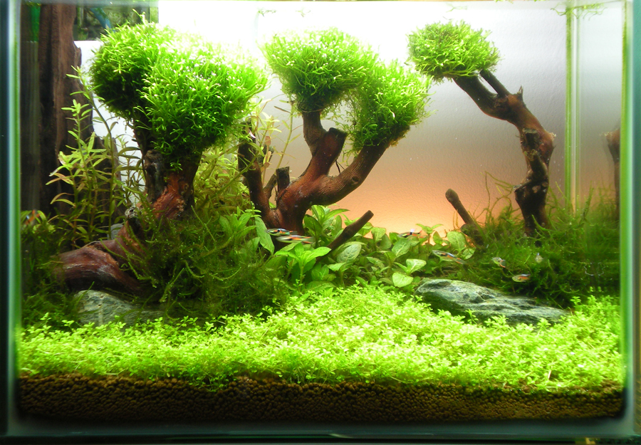 Fangorn Forest 20 Litre Aquascaping World Forum