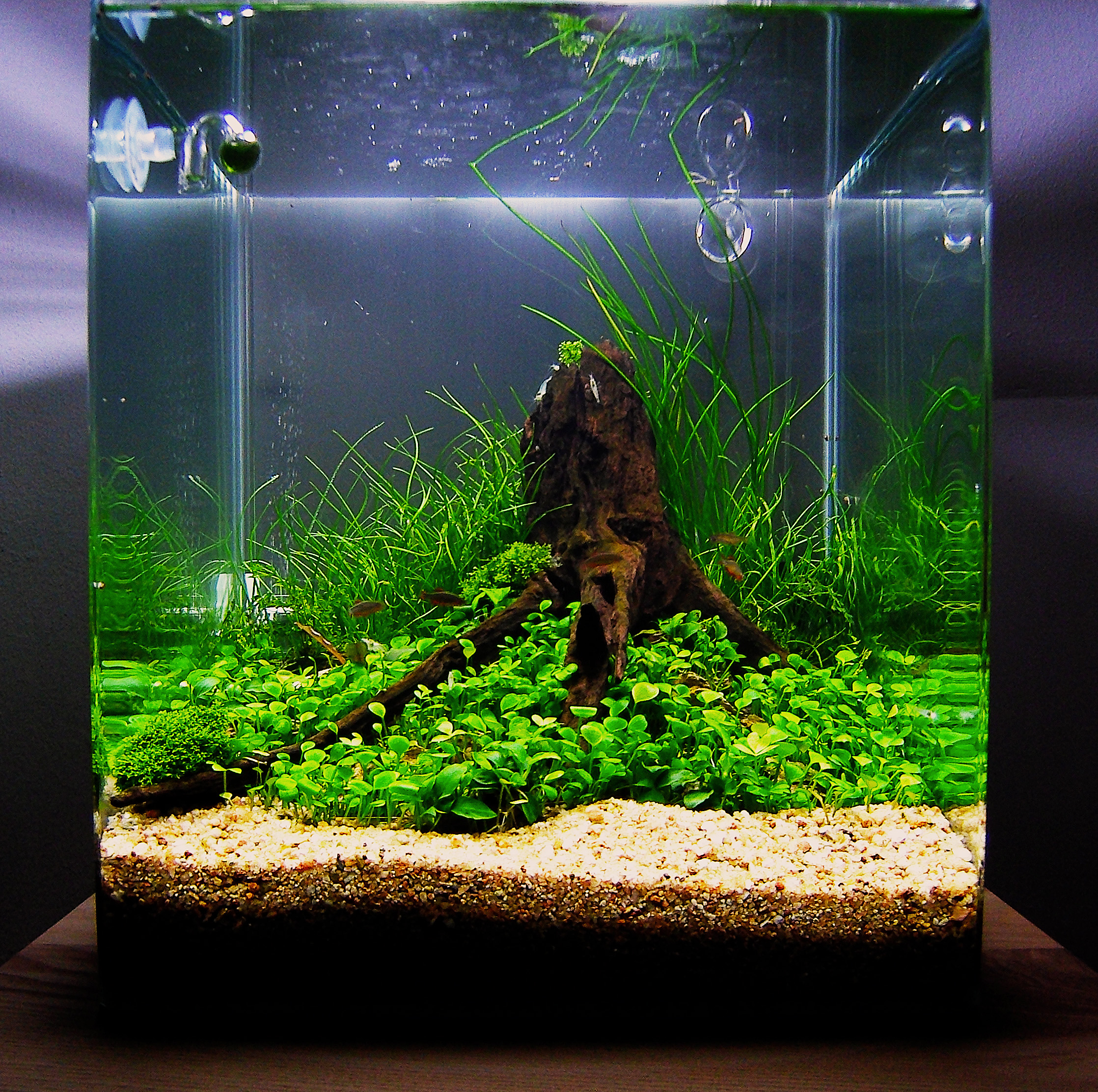 July 2010 aquascape of the month anyplace anytime for Good fish for small tanks