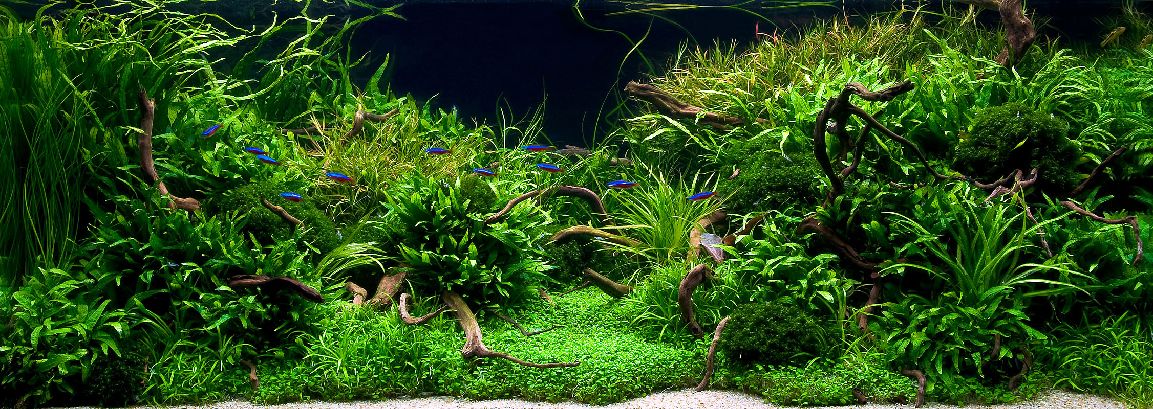 July 2010 aquascape of the month anyplace anytime aquascaping world forum - Gallery aquascape ...