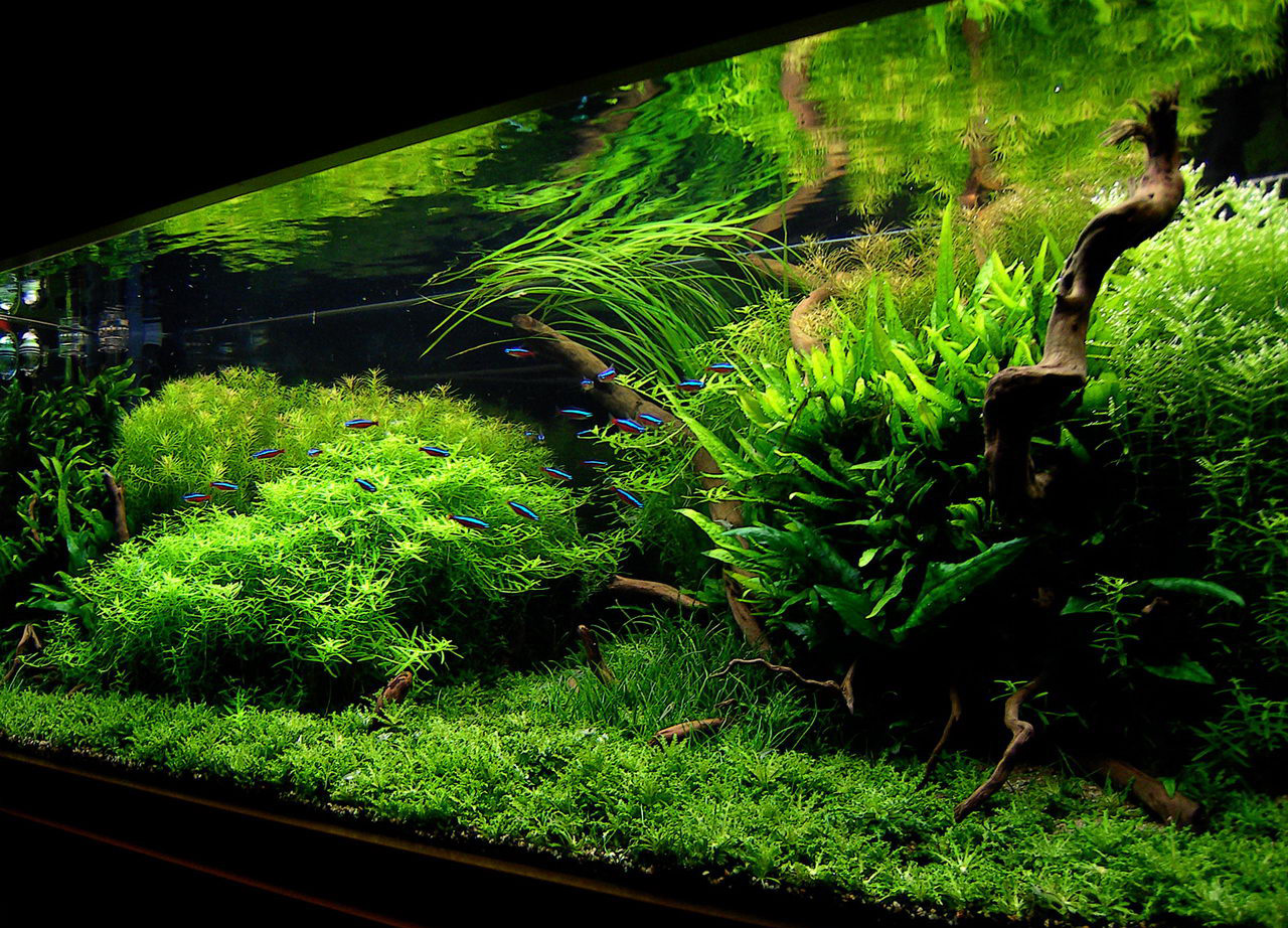 "July 2010 Aquascape of the Month: ""Anyplace... Anytime ..."