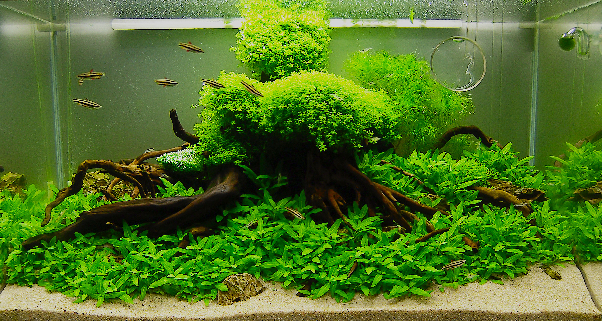 July 2010 Aquascape Of The Month Quot Anyplace Anytime Quot Aquascaping World Forum