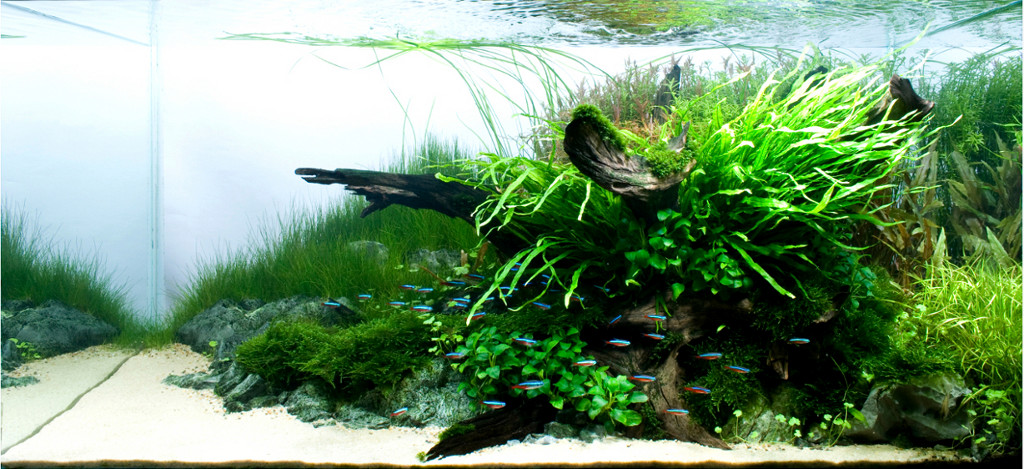 New 20l Aquascape The Planted Tank Forum