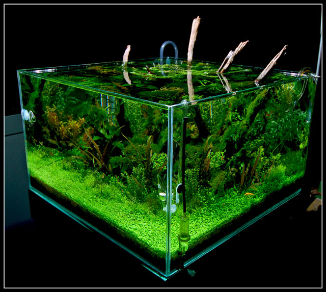 http://www.aquascapingworld.com/images/cube%20aquascape%20lpt.jpg