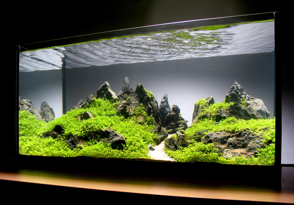 Any mountain scape progressions? - The Planted Tank Forum