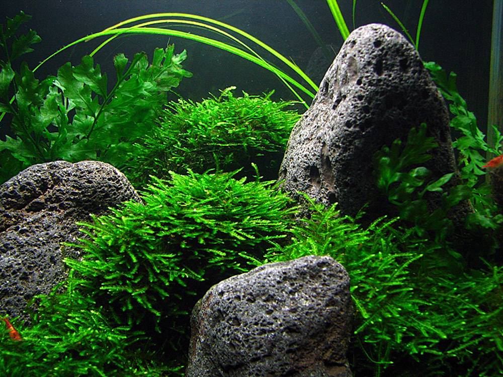 from aquascapingworld. com