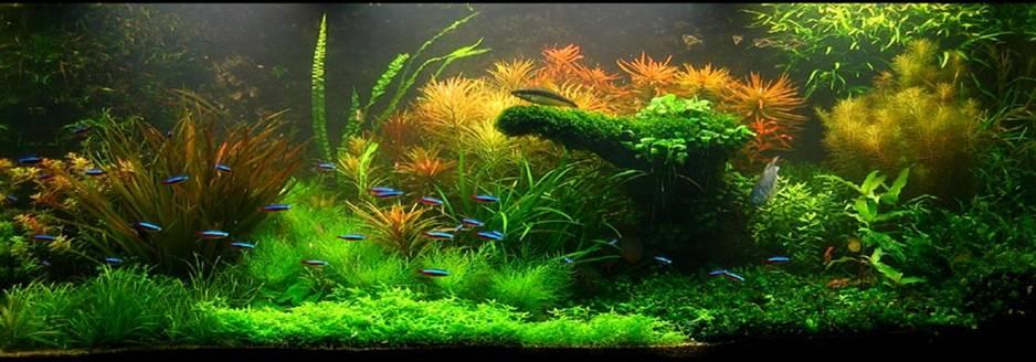 One of many winning aquascapes