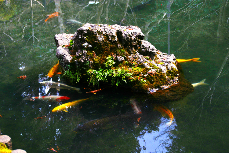 AquaScaping World Magazine - Japanese Gardens and Aquascaping