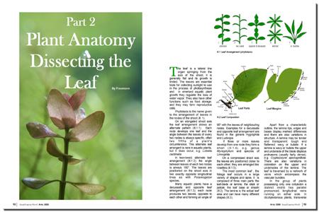 AquaScaping World Magazine - Plant Anatomy Part 2: The Leaf