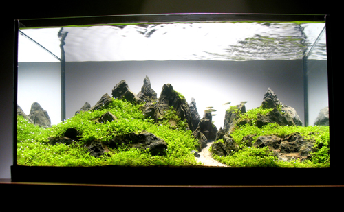A: I Tend To Look At Nature In A Different Way Now Than I Did Before I Took  Up The Aquascaping Hobby. I Think Once You Get Into The Spirit Of  Aquascaping, ...
