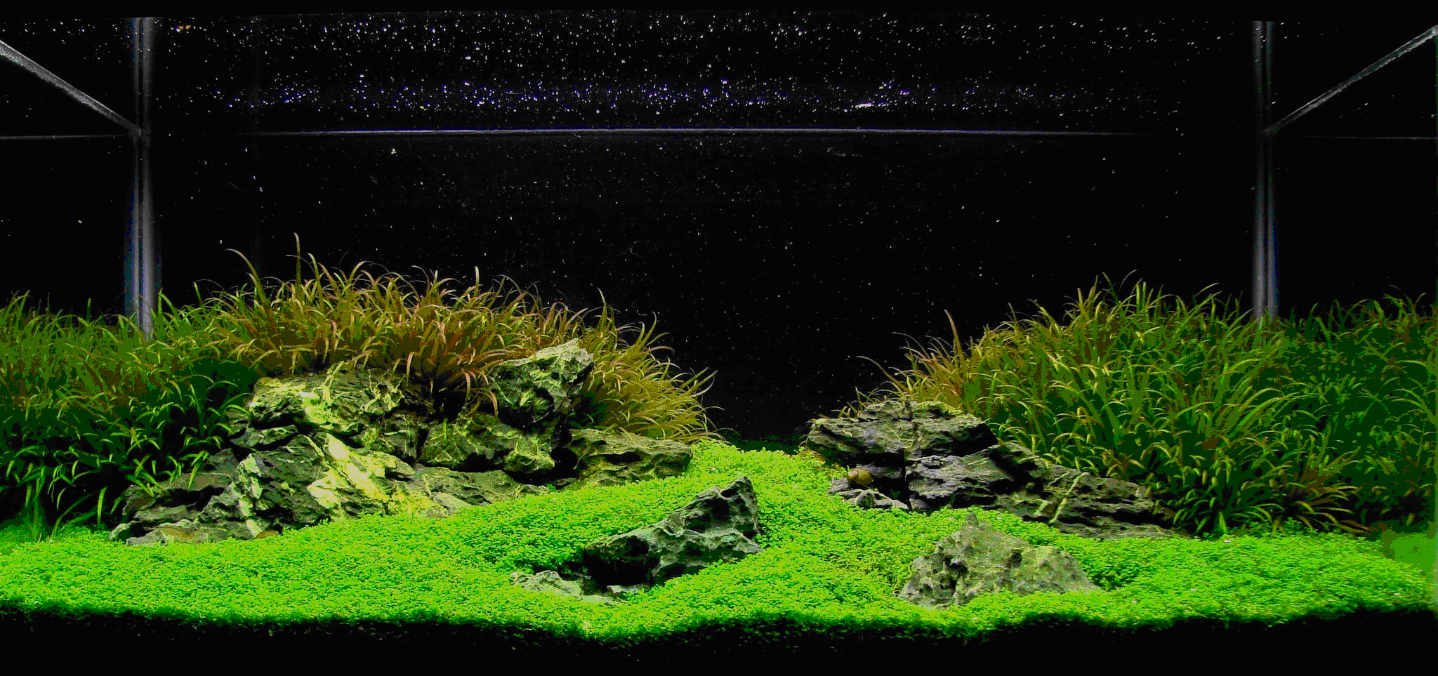 Tank layout for comment aquascaping aquatic plant central - Design aquasacpe ...