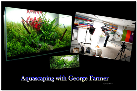 Aquascaping World Magazine Aquascaping With George Farmer