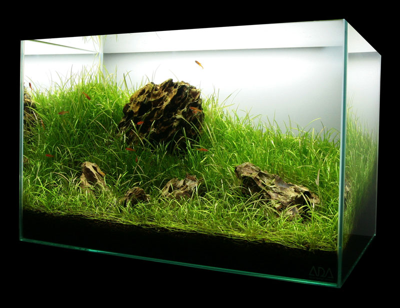 Aquascape in Focus: Sunny Grassland