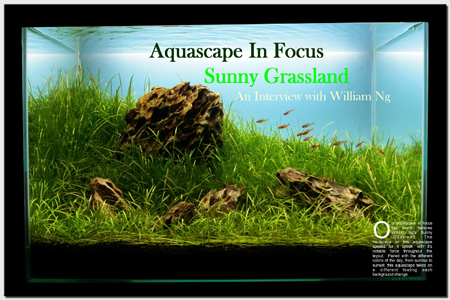 Aquascape in Focus