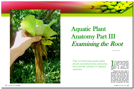 Aquatic Plant Anatomy: The Root