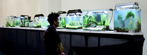 Mac Aquascaping Competition Tanks