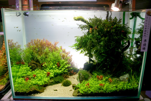 I Cannot Help But Think That Portugalu0027s Own Filipe Oliveirau0027s Little Tank,  Syrah, Has Made A Creative Impacted Here In Asia. Tokyo Aquascape