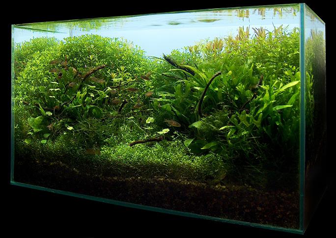 Nano Aquascape: Natural Mystic 15L AquaScaping World Forum