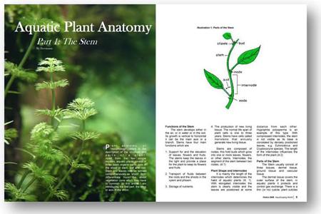 AquaScaping World Magazine - Plant Anatomy: Part 1 The Stem