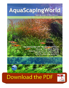 ASW May 2008 Issue