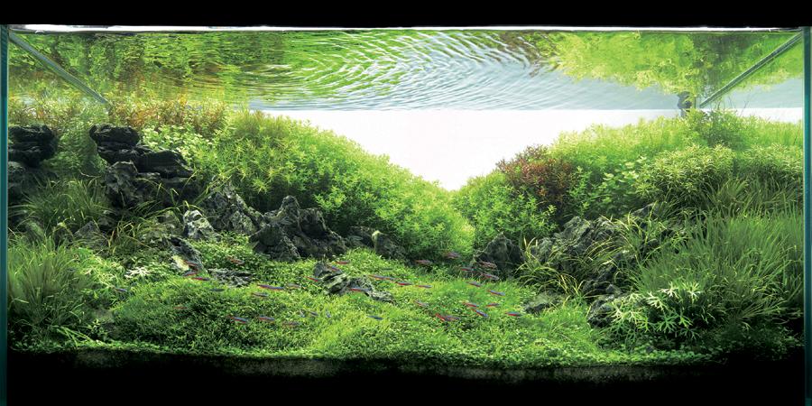 ADA Aquascape