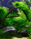 Creating Depth and Perspectve in an Aquascape