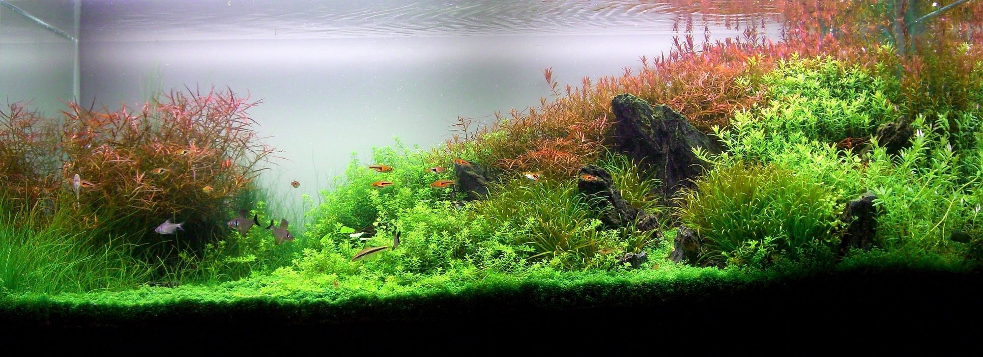 Planted aquarium wallpapers the planted tank forum for Plante aquarium